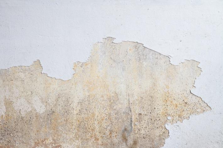 259527e227 Három héttel a festés után észleljük, hogy a festék repedezik, pereg a  falról? Tényleg nem jó érzés, valljuk be! Nem biztos, hogy mi rontottuk el  a munkát, ...